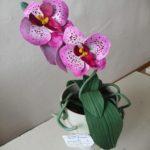 63 Арефьева Алина-Орхидея